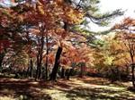上ノ山公園の紅葉.jpg