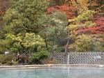 屋上露天風呂からの紅葉2.jpg