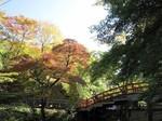 河鹿橋の紅葉8.jpg