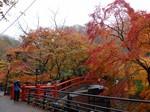 20121112河鹿橋の紅葉.JPG