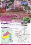 みさと芝桜まつり2.JPG