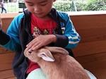 ウサギと遊ぼう1.jpg