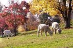 グリーン牧場の秋.jpg