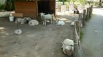 グリーン牧場の羊.jpg
