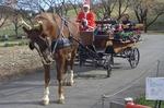 グリーン牧場クリスマス.jpg