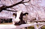 グリーン牧場春フェア2.jpg