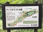 チャツボミゴケ1.JPG
