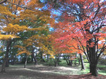上の山公園紅葉.jpg