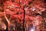上ノ山公園ライトアップ.jpg