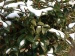 今朝の雪2.jpg