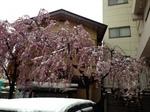 今朝の雪4.jpg