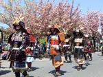 八重桜まつり.jpg
