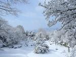 冬の赤城自然園.jpg