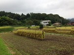 収穫の秋.jpg