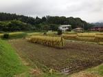 収穫の秋2013.jpg