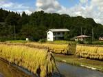 収穫の秋−2.jpg