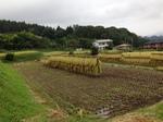 収穫の秋1.jpg