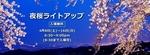 夜桜ライトアップ.jpg
