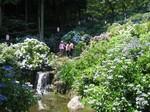 小野池アジサイ公園1.jpg