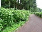 小野池3.JPG