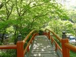 新緑の河鹿橋1.jpg