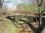 春の河鹿橋1.jpg