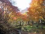 森林公園の紅葉.jpg