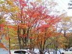 榛名湖の紅葉4.jpg