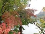 榛名湖周辺の紅葉.jpg