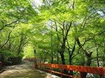河鹿橋の新緑.jpg