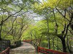 河鹿橋の新緑1.jpg