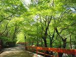 河鹿橋の新緑10.jpg