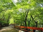 河鹿橋の新緑3.jpg