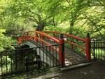 河鹿橋の新緑4.JPG