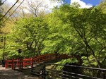 河鹿橋の新緑6.JPG