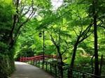 河鹿橋の深緑.jpg