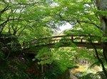 河鹿橋の深緑1.jpg