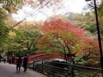 河鹿橋の紅葉.jpg