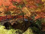 河鹿橋の紅葉10.jpg