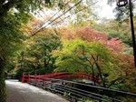 河鹿橋の紅葉7.jpg