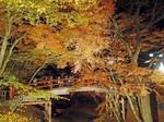 河鹿橋の紅葉ライトアップ.jpg