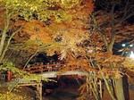 河鹿橋の紅葉1.jpg
