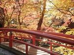 河鹿橋の紅葉22.jpg