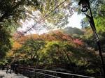 河鹿橋の紅葉3.jpg