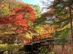 河鹿橋の紅葉5.jpg
