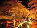 河鹿橋の紅葉6.jpg