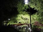 河鹿橋・深緑ライトアップ.jpg