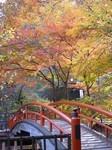河鹿橋紅葉.jpg