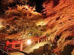河鹿橋紅葉ライトアップ1.jpg