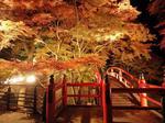 河鹿橋紅葉ライトアップ4.jpg